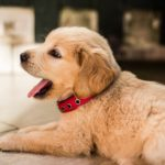 The Martingale Collar and Its Benefits