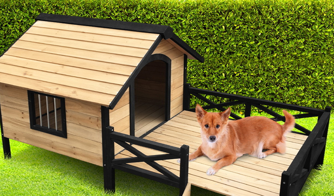 What are Dog Kennels & Runs